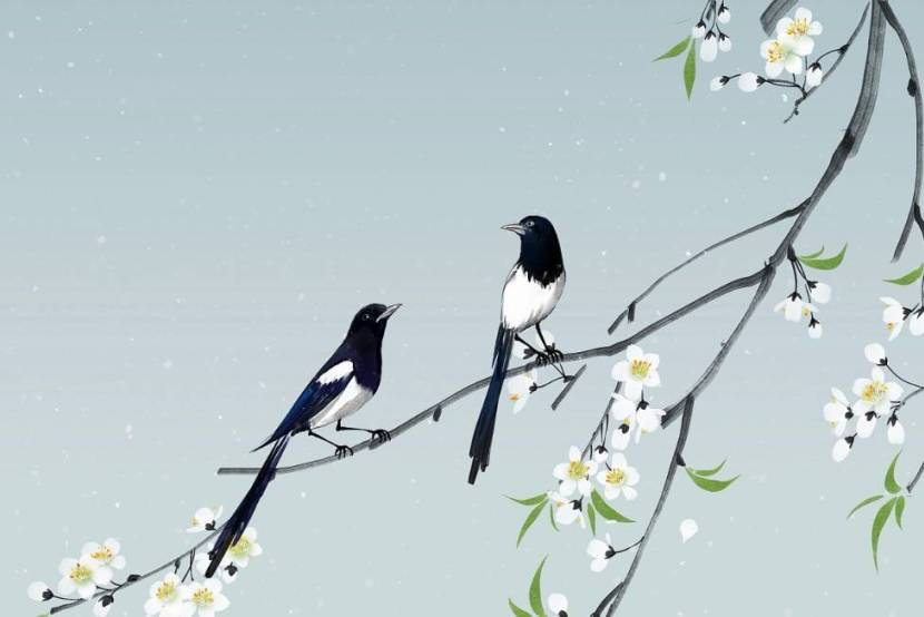 How do I love thee, magpies?