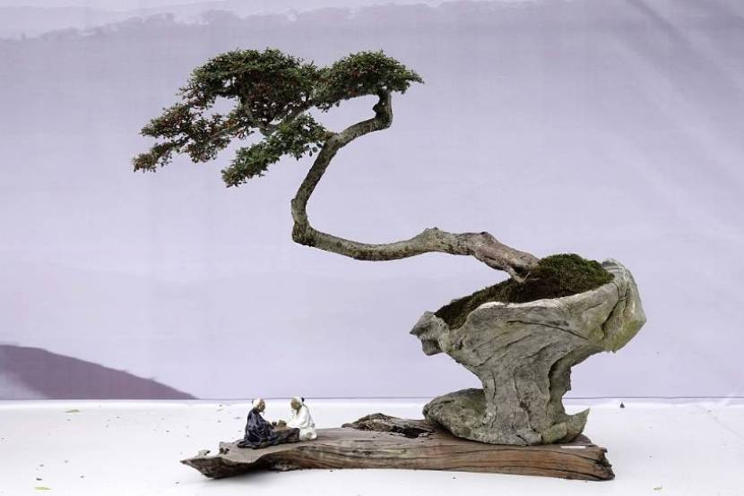 """Where does """"bonsai"""" REALLY come from?"""