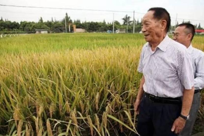 22.5 tonnes per hectare! China's hybrid rice yield breaks record